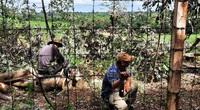 """Chặt hạ hơn 200 cây xanh trong KCN, lãnh đạo công ty nói """"dọn dẹp để trả lại mặt bằng"""""""