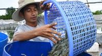 """Kiên Giang: Ở đây cứ thả tôm vào ruộng lúa là thu nhập nhân đôi, nông dân lãi """"khủng"""""""