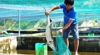 Lâm Đồng: Làm bể trên cạn nuôi cá tầm thoạt nhìn như tàu ngầm mi ni, nông dân này là tỷ phú