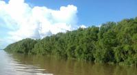 Trà Vinh là 1 trong 13 tỉnh Đồng bằng sông Cửu Long, vậy rừng phòng hộ ở tỉnh này là rừng gì?
