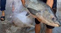 Nam Định: Điển hình nông dân sản xuất kinh doanh giỏi, cách làm giàu hay đang lan tỏa, có mô hình nuôi cá trắm đen