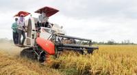 Vì sao Thủ tướng chỉ đạo kiểm tra mô hình cánh đồng lớn trồng lúa ở ĐBSCL?