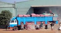 """Nhiều nhà máy chế biến sắn bị """"đe doạ"""" vì đói hàng, giá sắn tươi, sắn khô đồng loạt tăng"""