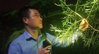 Vườn Xích Tùng dưới chân Yên Tử