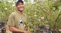 """Quảng Nam: 8X đam mê loài hoa """"nữ hoàng"""", thu lãi hàng trăm triệu mỗi năm"""