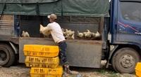 Giá gia cầm hôm nay 1/12: Cập nhật giá gà, vịt từng vùng mới nhất