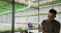 Hà Nội: Kỹ sư điện 8X bỏ nghề về quê trồng nấm mới lạ ứng dụng công nghệ cao, bán 750.000 đồng/hộp