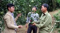 Hướng dẫn nông dân bón phân Lâm Thao hiệu quả, tiết kiệm, cây trồng lớn nhanh hoa trái đầy cành
