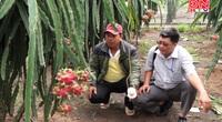 Đồng Nai: Giúp nông dân đầu tư đèn kích thích cây thanh long trái vụ