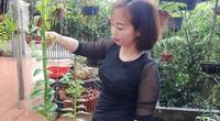 Vĩnh Phúc: Vỡ nợ vì ồ ạt trồng cây cảnh, theo nghề trồng lan rừng lại thu tiền tỷ