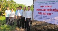 Hà Nam: Bưởi VietGAP thế chân cây lúa, hiệu quả cao gấp 4-8 lần