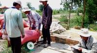 Long An: Vì sao tỉnh này khuyến cáo nông dân không tăng diện tích lúa nếp?