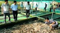 Trà Vinh: Nuôi hơn 21.000 con lươn đồng trong bể xi măng, kéo vỉ lên khách bất ngờ vì thấy toàn lươn to bự