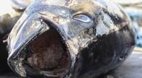Giá dầu giảm mạnh, chủ tàu tiết lộ điều bất ngờ dù cá bán có rẻ đi