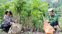 Trồng 2.000 cây gỗ lớn nhân Ngày của Mẹ