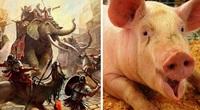 """Giải mã vũ khí siêu lạ của quân La Mã cổ đại: """"Lợn diệt voi"""""""