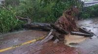 3 phụ nữ bị sét đánh chết khi trú mưa dưới gốc cây