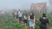 Sa Pa kích cầu du lịch và đón nhận kỷ lục Thung lũng hoa hồng lớn nhất Việt Nam