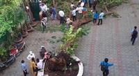Họp báo vụ cây phượng đổ làm 14 học sinh thương vong: Công an đã vào cuộc điều tra
