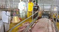 Masan MEATLife chuẩn bị xuất chuồng 45.000 con lợn cho tổ hợp chế biến thịt mát Meat Hà Nam