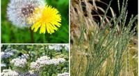 """8 loại cỏ dại tưởng """"vô thường"""" lại có giá trị không tưởng"""