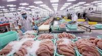 Dân Trung Quốc tiêu thụ chậm, xuất khẩu cá tra chưa hết khó