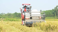 Xu hướng mua máy gặt mới để thu hoạch lúa vụ mùa đông – xuân của nông dân miền Bắc
