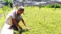 Vĩnh Long: Nắng nóng kéo dài, giá rau xà lách xoong tăng vù vù, sẽ sớm đạt mức 70.000 đồng/ký?