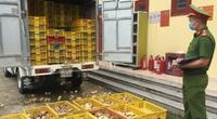 Lạng Sơn: Bắt 6.500 con gà giống nhập lậu không rõ nguồn gốc