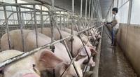Nóng: Lần đầu tiên Bộ NN&PTNT cho nhập khẩu lợn sống
