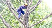 TP.HCM: Tổng kiểm tra, rà soát cây xanh toàn thành phố