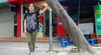 Hiểm hoạ đến từ những cây xanh chết khô trên đường phố Hà Nội