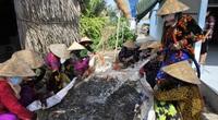 Nhộn nhịp lội ruộng bắt tôm càng xanh to, bự, nhảy tanh tách ở Kiên Giang