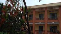 Thêm cây phượng bật gốc ở sân trường tiểu học tỉnh Đồng Nai