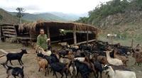 Nghệ An: Chia sẻ mô hình làm giàu ở nông thôn, cách hay giúp hộ nghèo vượt khó