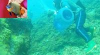 """Nghề săn cá cảnh biển ở Lý Sơn khó cỡ nào mà chỉ có chừng chục người """"dám chơi"""""""