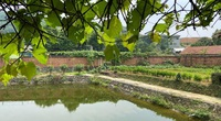 Trang trại đồng quê gần Hà Nội hút khách tham quan dịp nghỉ lễ 30/4
