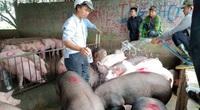 """Tái đàn lợn thời dịch tả lợn châu Phi: """"Cuộc chơi"""" không dành cho người liều"""