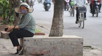 Hà Nội: Cây xanh ven đường đang bị 'đóng hộp' bằng xi măng, bê tông