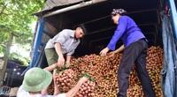 Đón 309 thương nhân Trung Quốc sang mua vải thiều ngay tại cửa khẩu bằng xe chuyên dụng