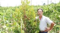 Rời phồn hoa đô hội, lên non cao nước biếc, trồng rau hút khách du lịch