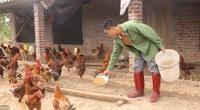 Quảng Ninh: Cầu nối giúp nông dân Đầm Hà tiêu thụ sản phẩm