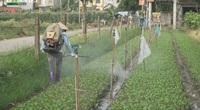 Hà Nội: Xử phạt nông dân dùng thuốc BVTV lậu sau loạt bài của Dân Việt