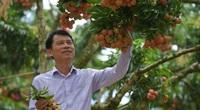 Không mua qua thương nhân Trung Quốc, Singapore trực tiếp mua vải thiều, thủy sản từ Việt Nam