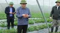 """Cử nhân về làng làm nông dân, giải """"cơn khát"""" nhân lực trình độ cao tại các hợp tác xã"""