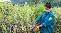 """Hà Tĩnh: Đường làng trồng toàn hoa sim tím, đi qua lỡ không chụp ảnh khoe thì """"ấm ức"""""""
