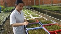 Cô nông dân xinh đẹp Tây Ninh làm giàu từ nghề trồng hoa lan cấy mô
