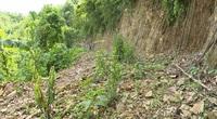 """Hoà Bình: Xã Mường Chiềng không cho trồng rừng vì """"không tìm thấy văn bản"""""""