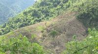 """Hoà Bình: Gây """"khó"""" doanh nghiệp trồng rừng, lãnh đạo huyện Đà Bắc có hiểu luật?"""