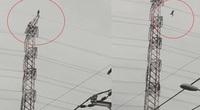 Video: Kinh hoàng người đàn ông đứng trên đỉnh cột điện cao thế rồi nhảy xuống